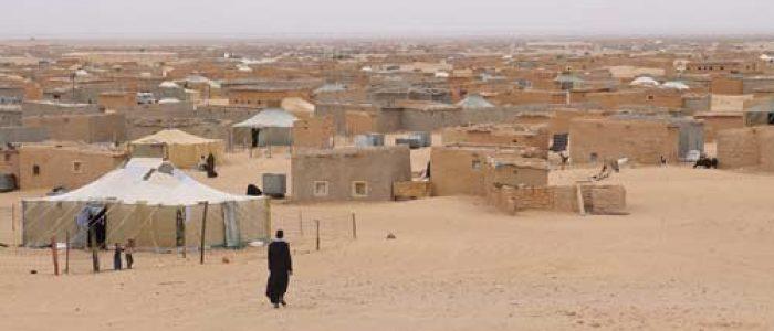 new_segrest_Sahara
